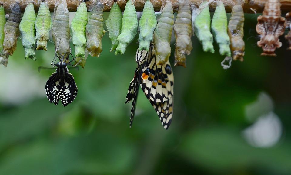 Масаж с пашкули на копринени буби срещу бръчки / ЗДРАВЕ..